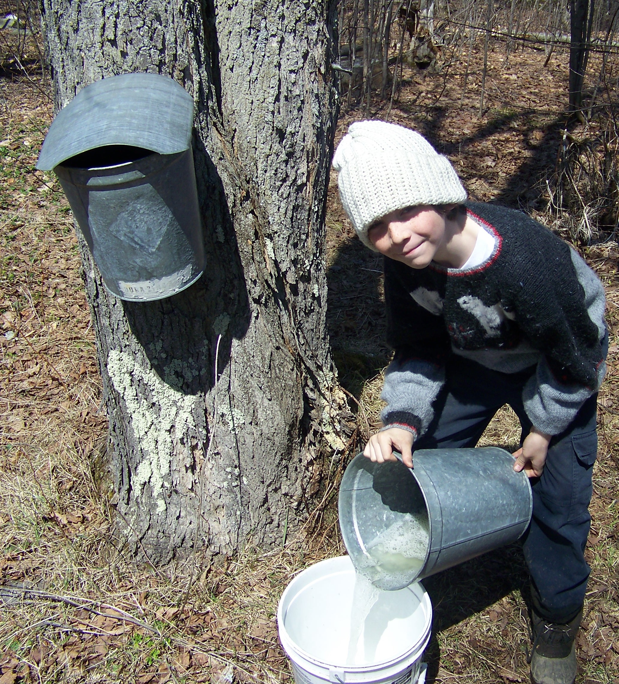 Maple Sugaring A Time of Gathering 02
