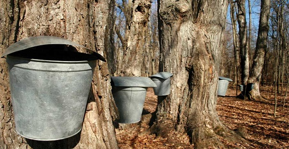 maple-bucket.jpg